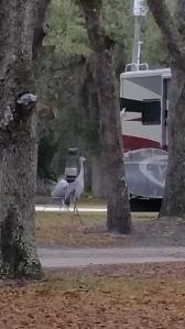 Not an alien, but a Sandhill Crane, I believe!
